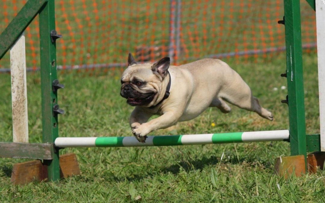5 Creative Dog Training Business Names